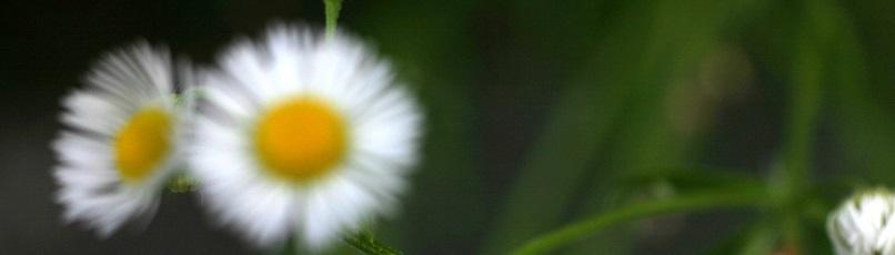 El sueño en la práctica meditativa