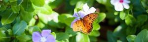 Qué es el Advaita y la No-dualidad
